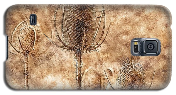 Galaxy S5 Case featuring the photograph Teasel Heads  by Dariusz Gudowicz