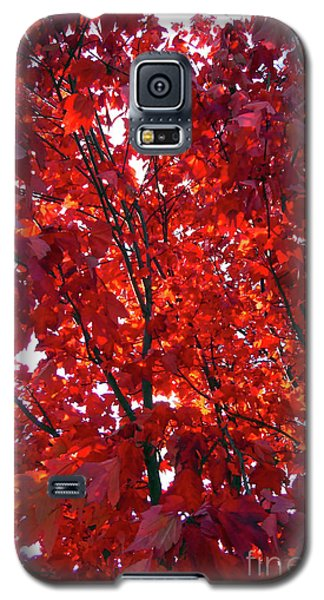 Galaxy S5 Case featuring the photograph Tennessee Trees 3 by Jeanne Forsythe