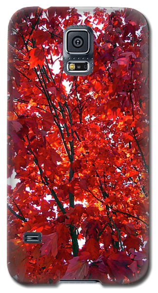 Tennessee Trees 3 Galaxy S5 Case