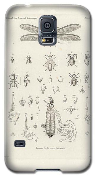 Termites, Macrotermes Bellicosus Galaxy S5 Case by H Hagen