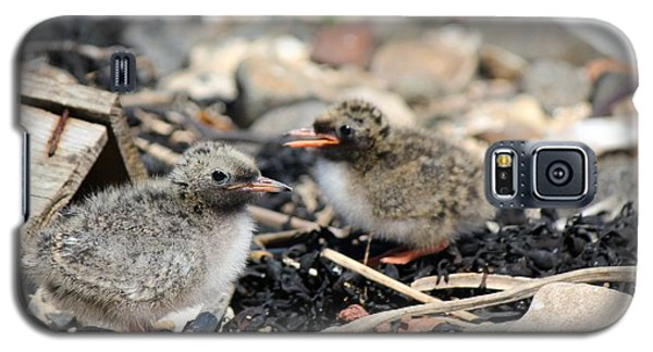 Galaxy S5 Case featuring the photograph Tern Chicks by David Grant
