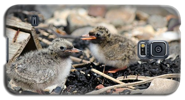 Tern Chicks Galaxy S5 Case