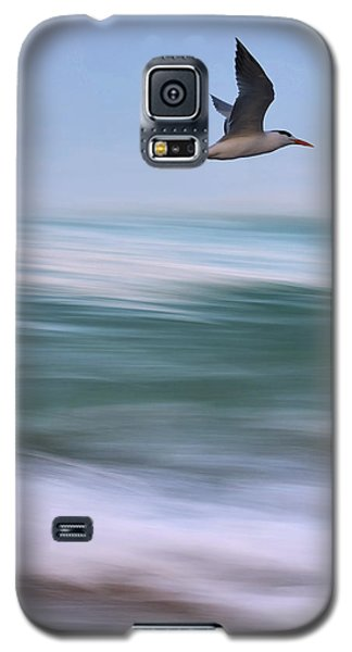 Galaxy S5 Case featuring the photograph Tern Flight Vert by Laura Fasulo