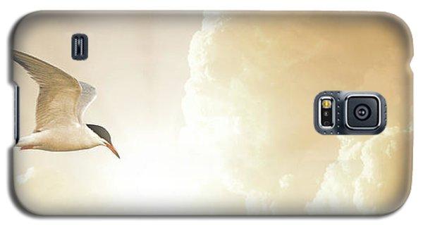 Tern In Flight, Spiritual Light Of Dusk Galaxy S5 Case