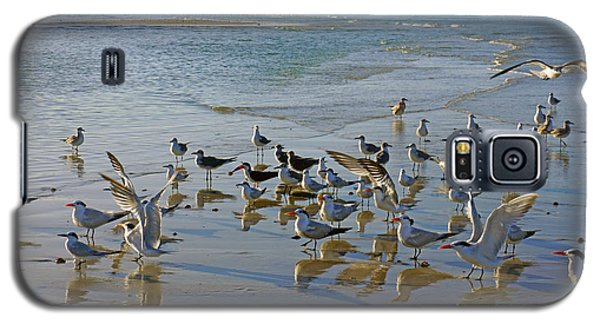 Terns And Seagulls On The Beach In Naples, Fl Galaxy S5 Case by Robb Stan