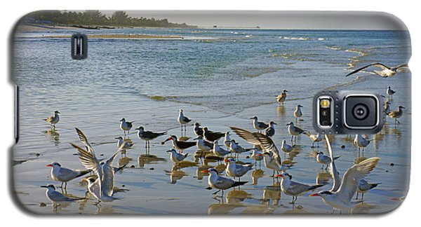 Terns And Seagulls On The Beach In Naples, Fl Galaxy S5 Case