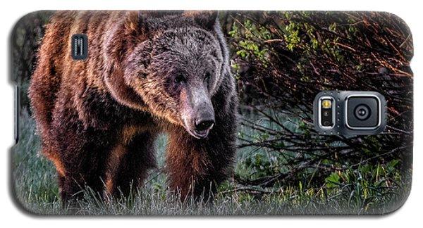 Teton Grizzly Galaxy S5 Case
