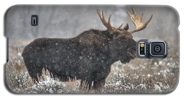 Galaxy S5 Case featuring the photograph Teton Snowy Moose by Adam Jewell