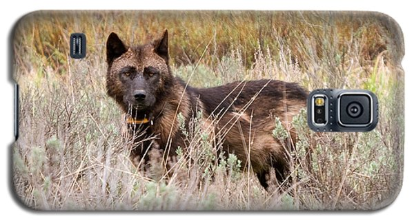 Teton Wolf Galaxy S5 Case