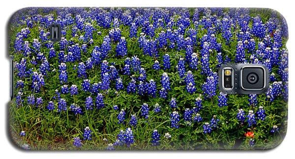 Texas Bluebonnets #0484 Galaxy S5 Case