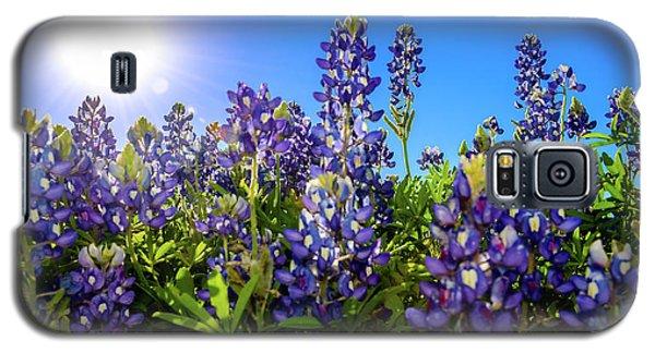 Texas Bluebonnets Backlit II Galaxy S5 Case by Greg Reed