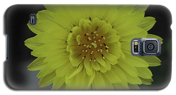 Texas Dandelion Galaxy S5 Case by Robyn Stacey