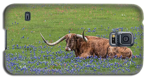 Texas Longhorn And Bluebonnets Galaxy S5 Case
