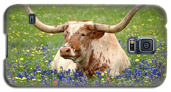 Texas Longhorn In Bluebonnets Galaxy S5 Case