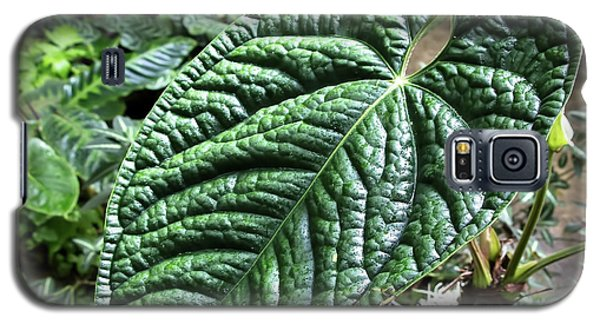 Texture Of A Leaf Galaxy S5 Case