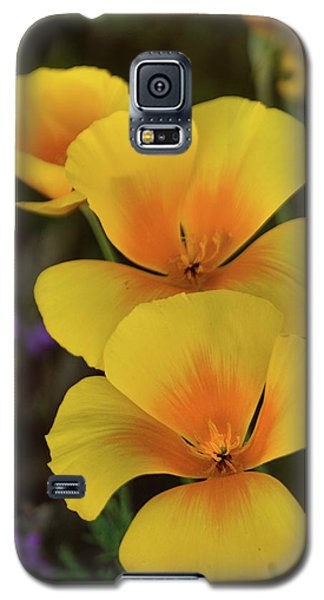 Galaxy S5 Case featuring the photograph That Golden Spring Glow  by Saija Lehtonen