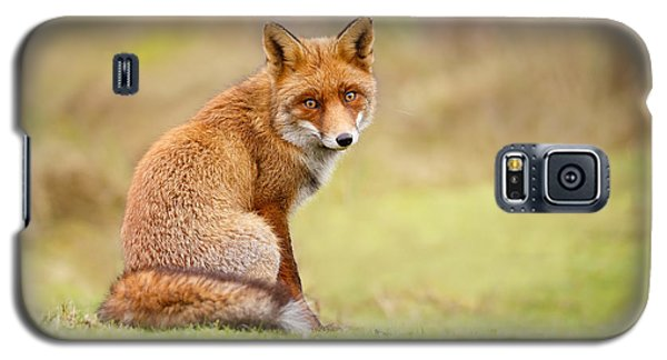 That Look - Red Fox Male Galaxy S5 Case