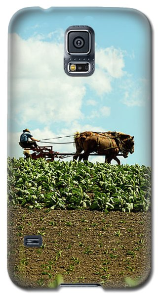 The Amish Farmer With Horses In Tobacco Field Galaxy S5 Case