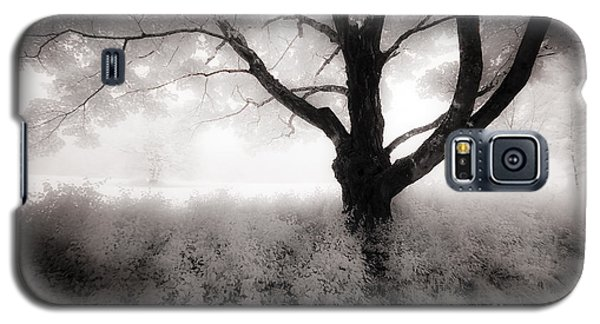 Galaxy S5 Case featuring the photograph The Ancient Tree by Craig J Satterlee