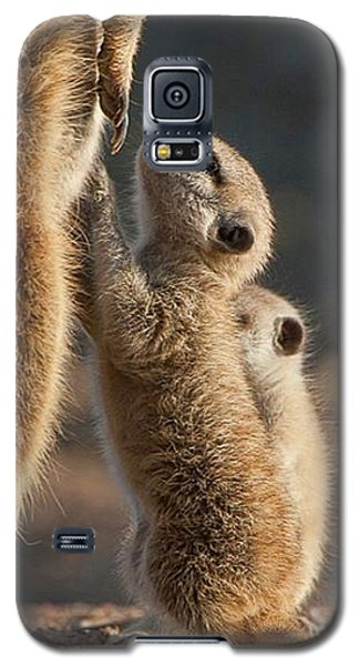 Meerkat Galaxy S5 Case - The Baby Is Hungry by Happy Home Artistry