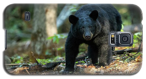 Galaxy S5 Case featuring the photograph The Bear by Everet Regal