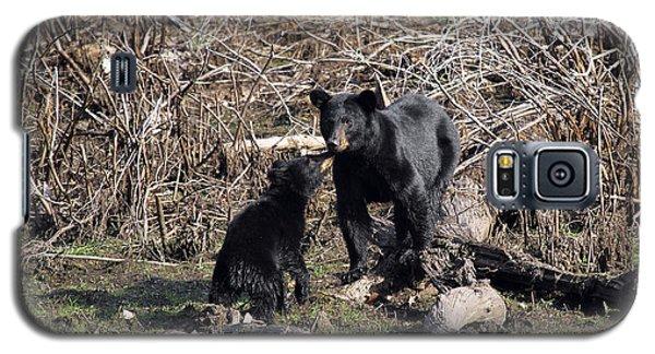 The Bears IIi Galaxy S5 Case