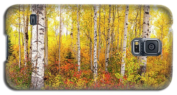 The Beauty Of The Autumn Forest Galaxy S5 Case