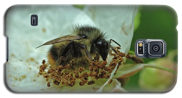 The Bee Galaxy S5 Case
