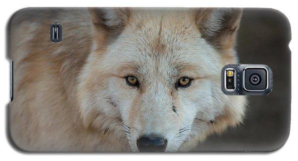 The Big Beautiful Wolf Galaxy S5 Case