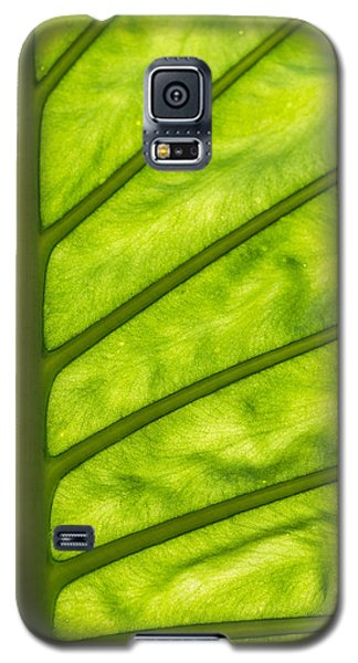 The Big Leaf Galaxy S5 Case