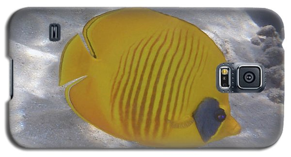 The Bluecheeked Butterflyfish Red Sea Galaxy S5 Case
