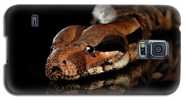 The Boa Constrictors, Isolated On Black Background Galaxy S5 Case by Sergey Taran