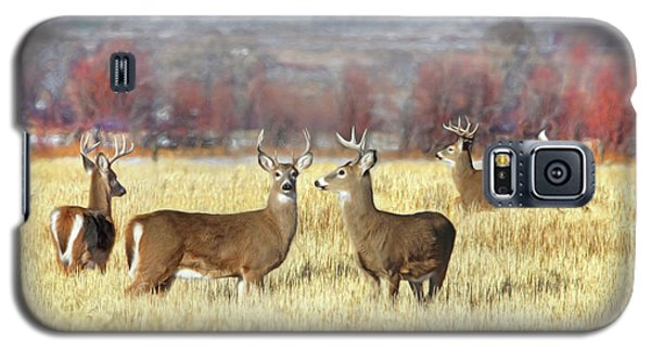 Galaxy S5 Case featuring the photograph The Bucks Stop Here White-tail Deer  by Jennie Marie Schell