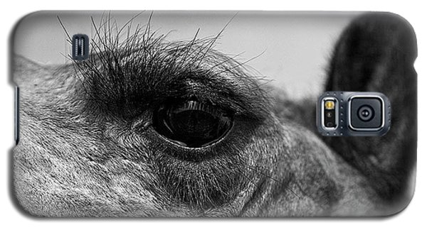 The Camels Eye  Galaxy S5 Case