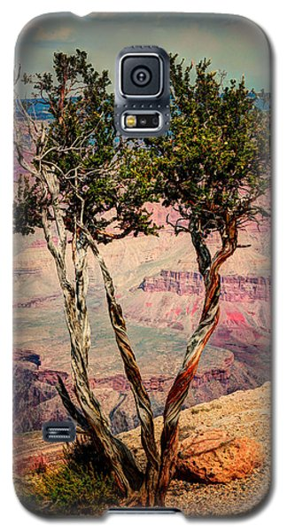 Galaxy S5 Case featuring the photograph The Canyon Tree by Tom Prendergast