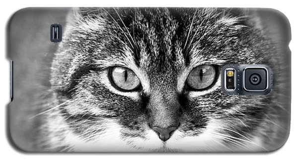The Cat Stare Down Galaxy S5 Case