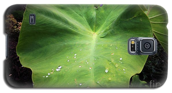 The Catcher Galaxy S5 Case