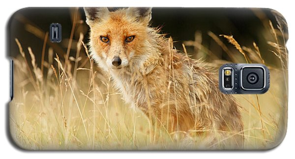The Catcher In The Grass - Wild Red Fox Galaxy S5 Case by Roeselien Raimond