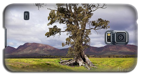 Galaxy S5 Case featuring the photograph The Cazneaux Tree by Bill Robinson