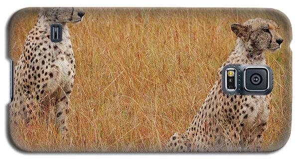 The Cheetahs Galaxy S5 Case by Nichola Denny