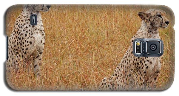 Cheetah Galaxy S5 Case - The Cheetahs by Smart Aviation
