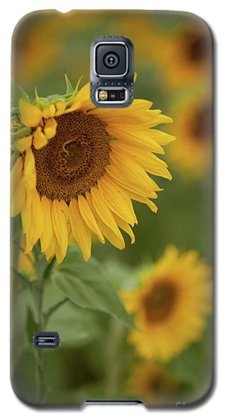 The Close Up Of Sunflowers Galaxy S5 Case
