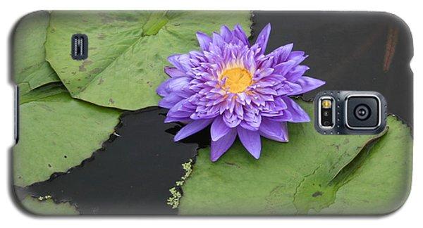 Galaxy S5 Case featuring the photograph The Color Of Splendor by David Dunham