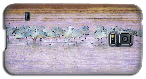 The Cranes Of Bosque Galaxy S5 Case
