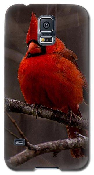 The Crimson Suit Galaxy S5 Case