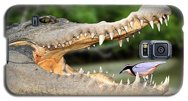 The Crocodile Bird Galaxy S5 Case