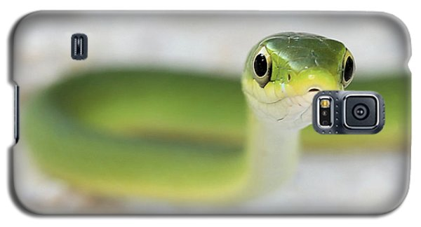 The Cute Green Snake Galaxy S5 Case by JC Findley