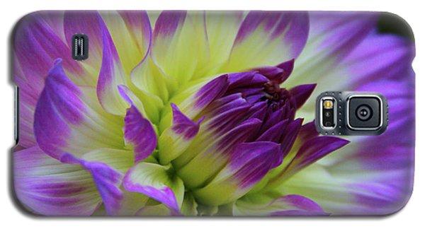 695 Dahlia Galaxy S5 Case