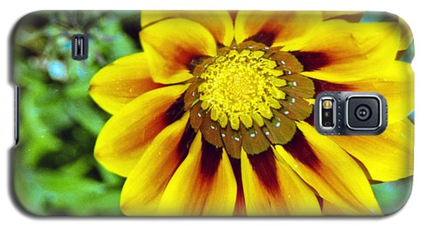 Galaxy S5 Case featuring the photograph The Daisy by Matthew Bamberg