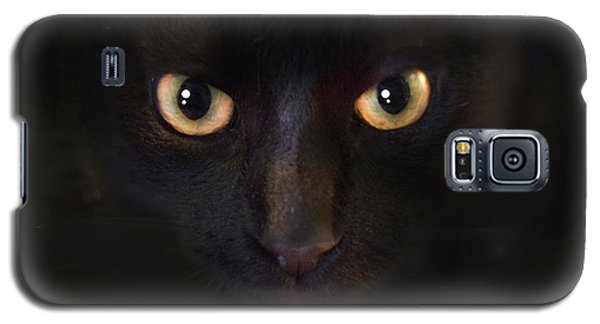 Galaxy S5 Case featuring the photograph The Dark Cat by Gina Dsgn